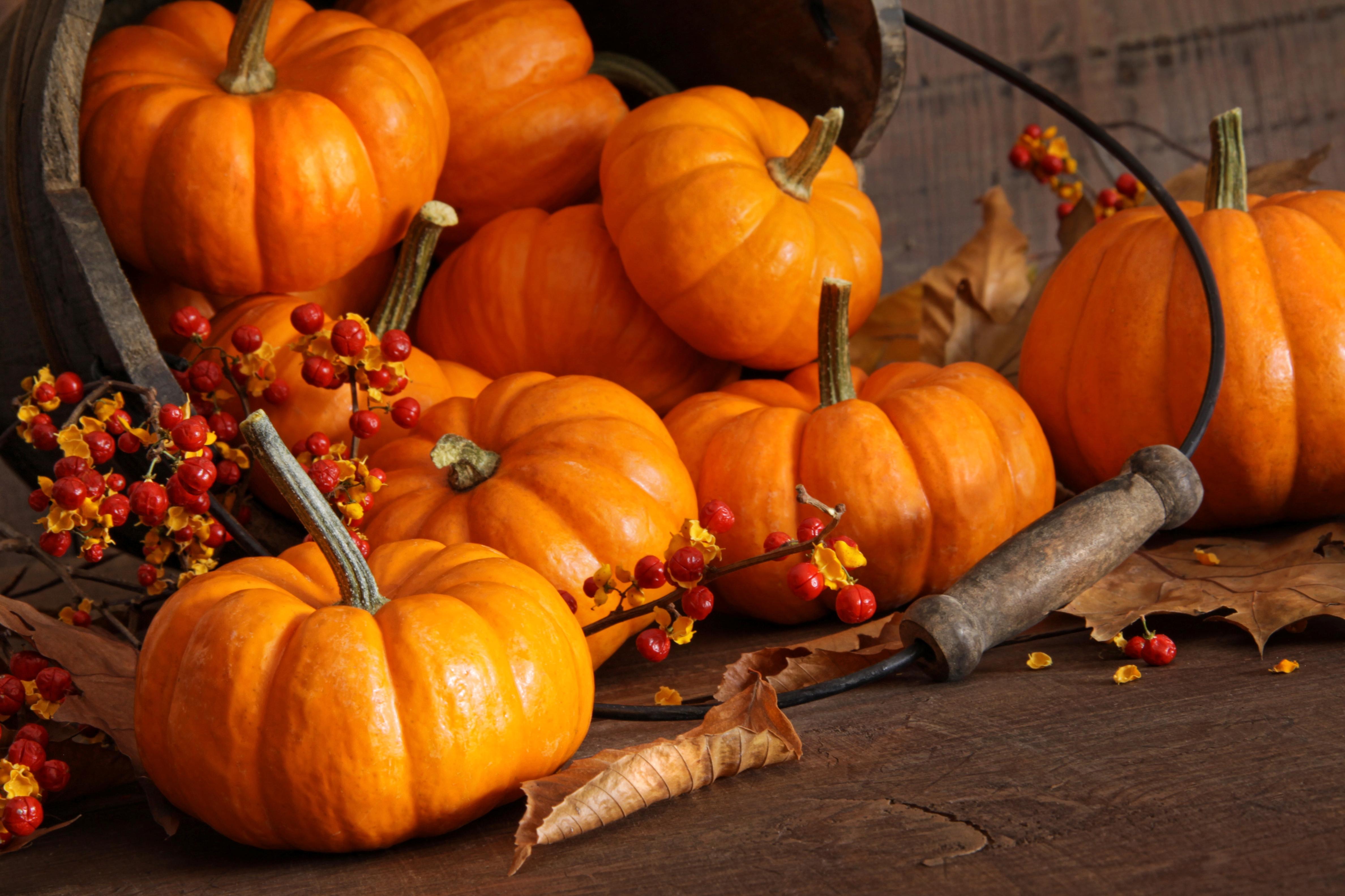Halloween Events in La Cala de Mijas, Riviera del Sol, Torrenuava, Miraflores & Calahonda